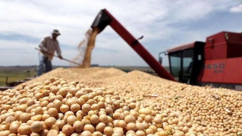 Syngenta anunció acuerdo con una importadora china para vender soja por más de US$ 500 millones - Télam - Agencia Nacional de Noticias