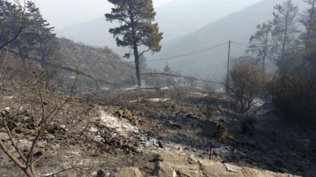 Según sus cálculos, el fuego afectó el 80% de las 40 hectáreas que rodean al Observatorio Astronómico