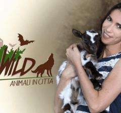 Go wild Animali in città Rai Play