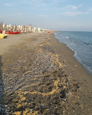 Cere paraffiniche o polietileniche, ecco il materiale spiaggiato sulla costa toscana. Ancora rifiuti in mare