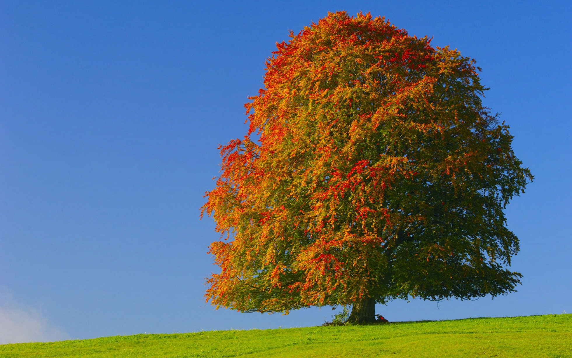 the best trees for