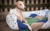 Dogs in jumpers - Pets