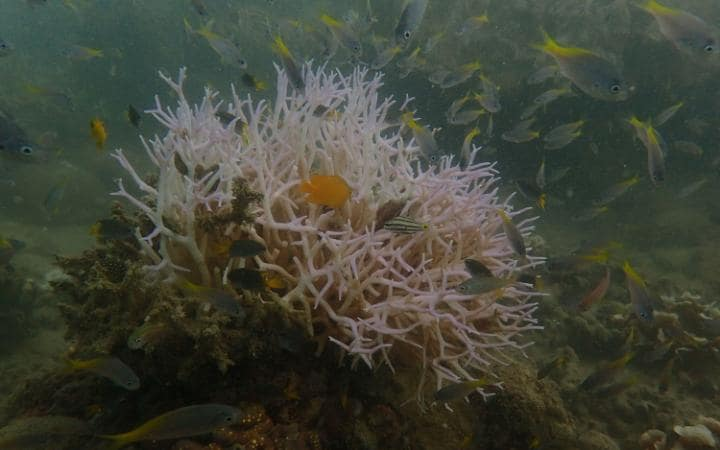 Photos have emerged that reveal fresh coral bleaching around Palm Island, Townsville