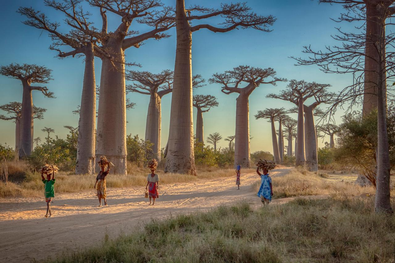 16 amazing things you probably didnt know about Madagascar
