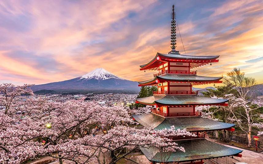 guide to cherry blossom