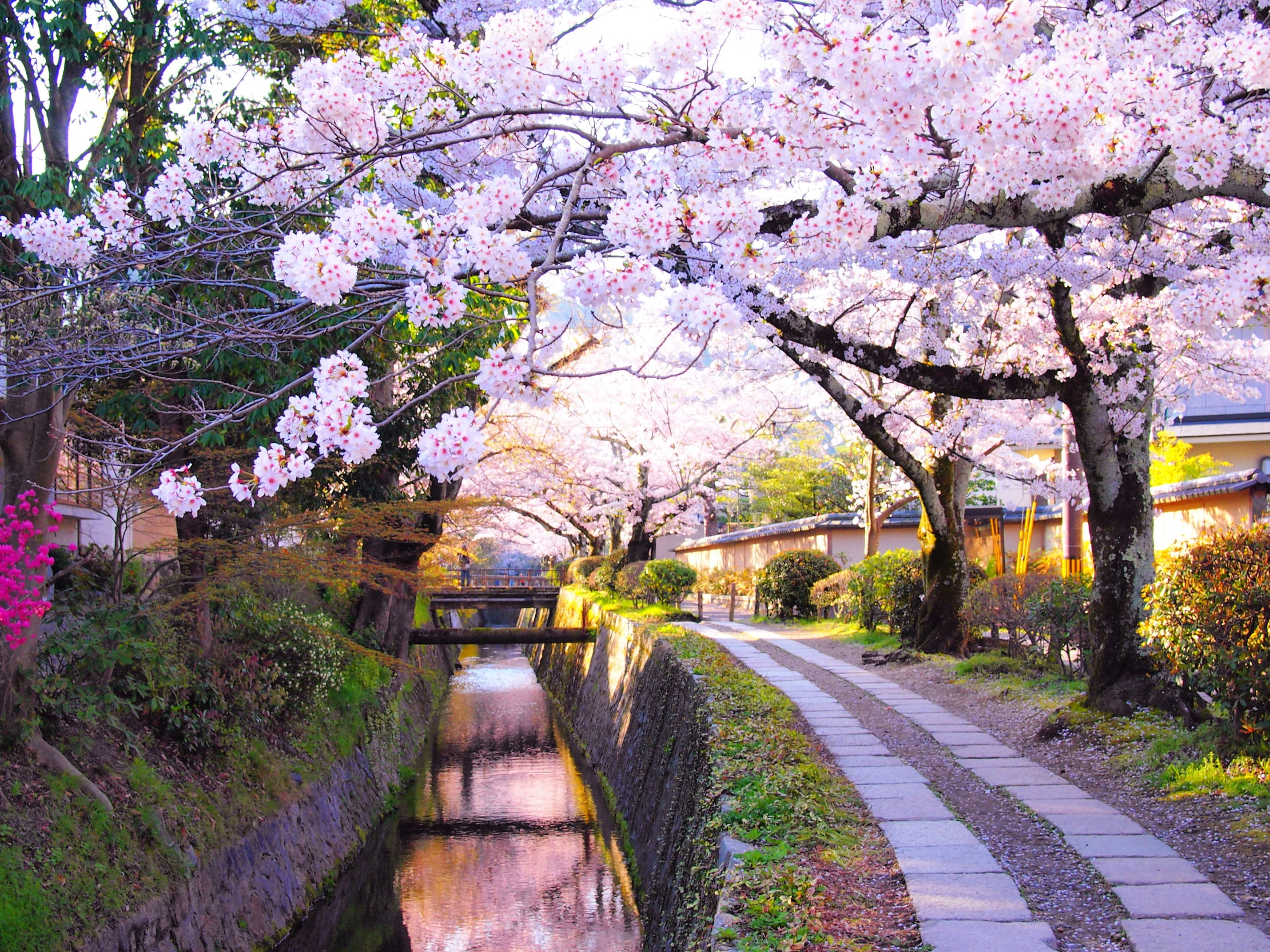 Tokyo Geisha Girl Wallpaper Background The 20 Greatest Destinations For Flowers