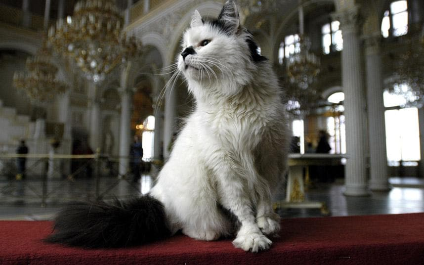 St Petersburg The Cats Of The Hermitage Telegraph