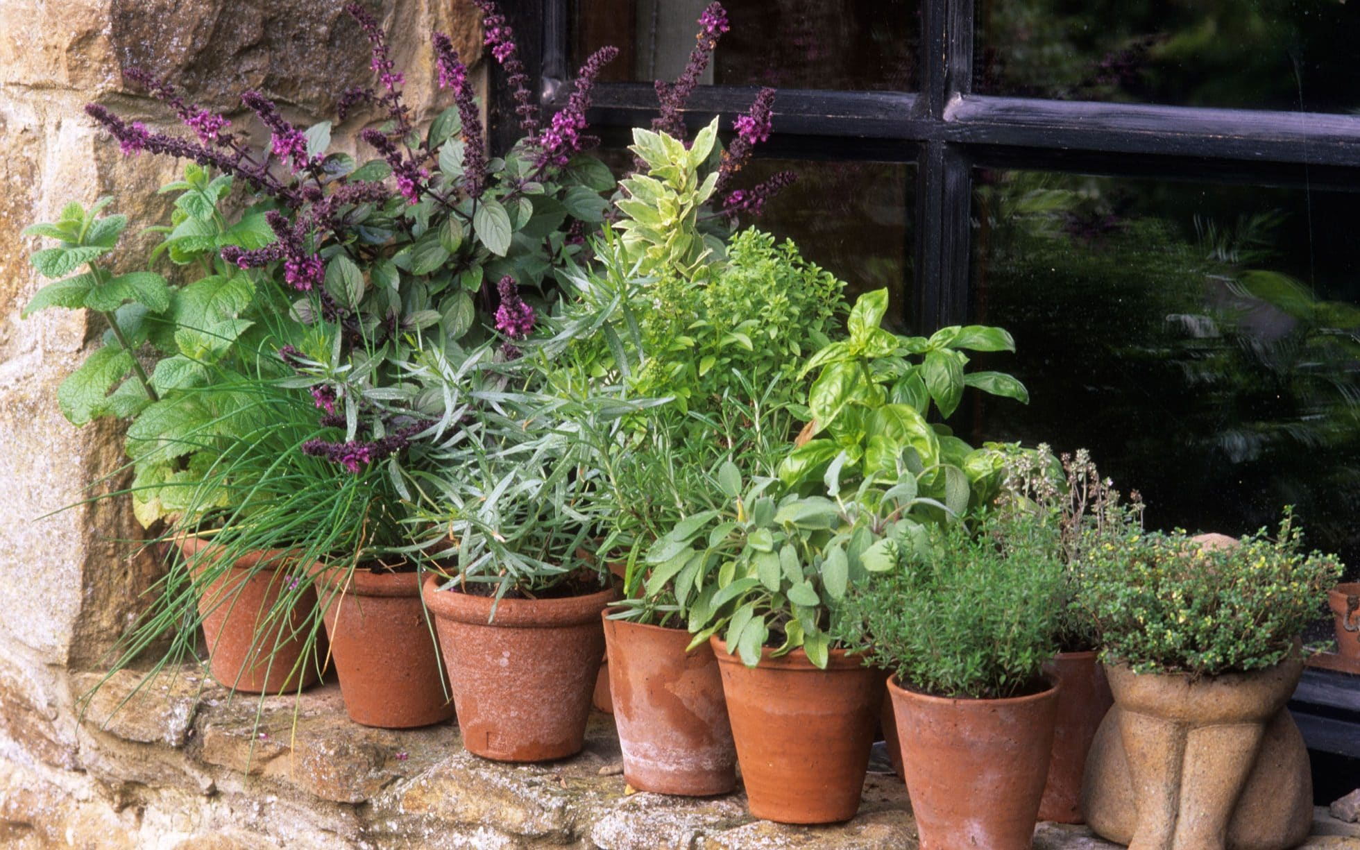 Planning A Herb Garden Here S How To Grow Herbs In The Uk The Telegraph