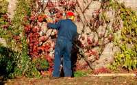 Gardening calendar: what to do in February | The Telegraph