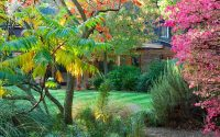The best trees for small gardens | The Telegraph