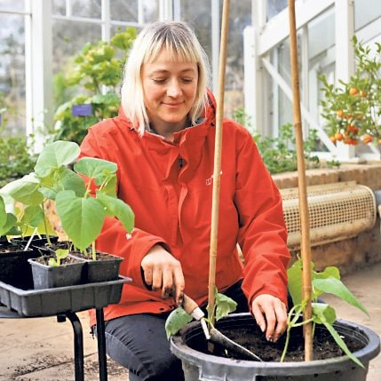 Lucy Hart shows you how to grow runner beans