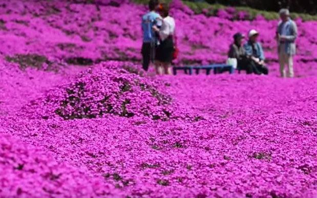 Visitors look round the flower garden in Shintomi.