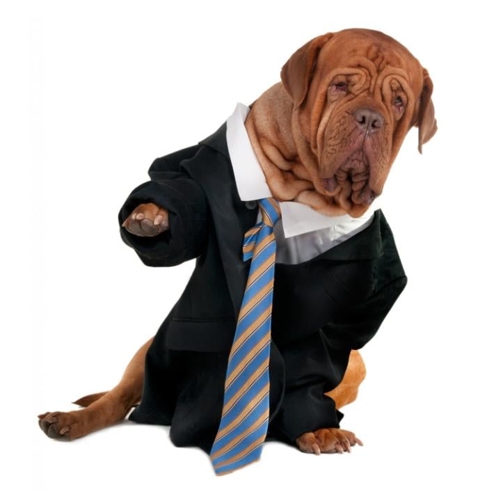 A dog in a business suit