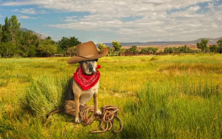 A dog in a field dressed up as a cowboy with a stetson, scarf and lasso
