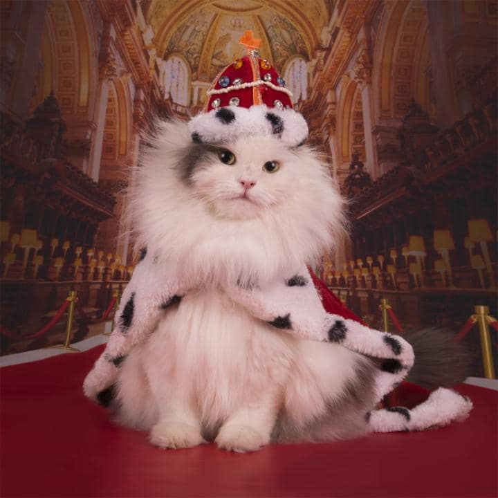 A cat wearing a pope outfit in the Vatican City