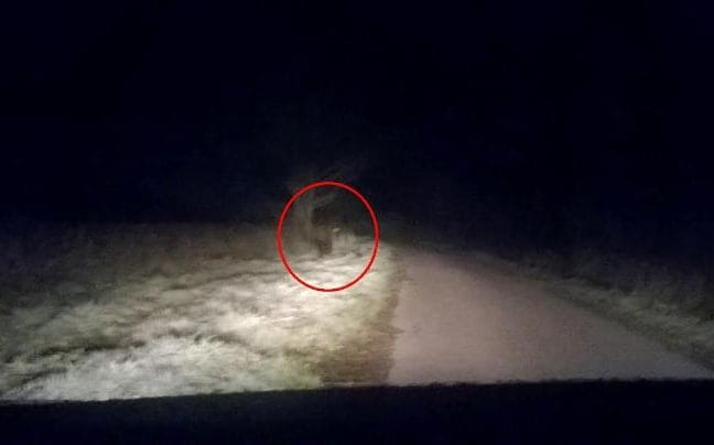 Terrified couple claim to see werewolf