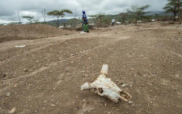 An animal skull lies in the dirt