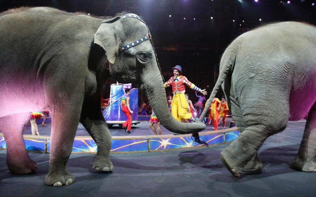 America S Most Famous Circus Elephants Retire