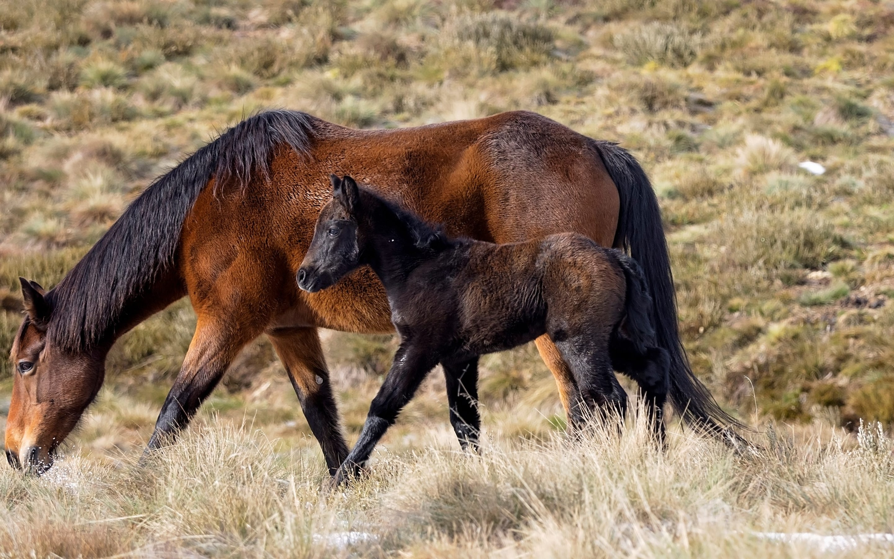 Save The Brumbies Protesters Are Trying To Stop Australia From Culling Its Wild Horses