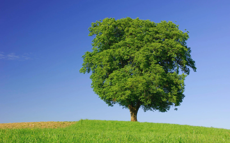 do trees have feelings