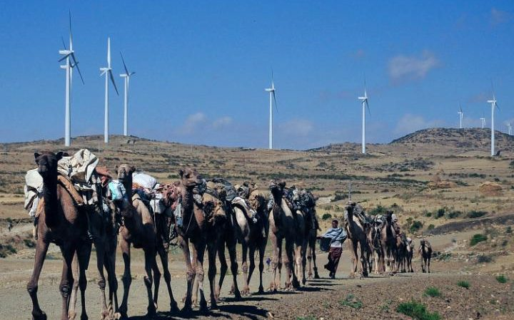 Camels walk along the road near turbines at Ashegoda wind farm in Ethiopia's northern Tigray region, on November 28, 2013.