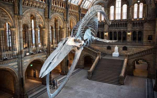 Thousands Of Artefacts 'missing' Britain' Top Musuems