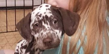 Dog owners warned to watch out for drones after dognappers steal autistic girl's Dalmatian
