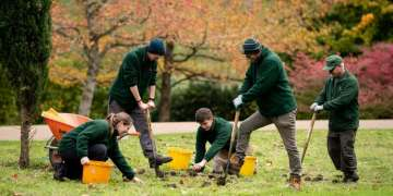 Planting trees cannot offset burning wooden, warn experts after government advisers recommend it as renewable fuel