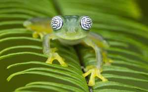Rainforests frogs have evolved to wave instead of crackle to attract women because the waterfalls are too loud