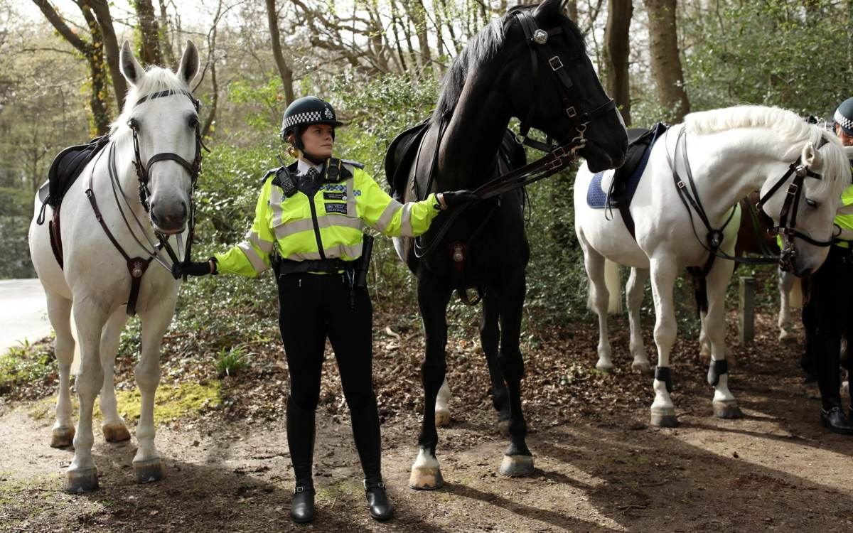 Police teams on horseback search an area in Epping Forest