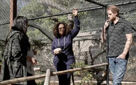 meghan harry Oprah and the rescued chicken