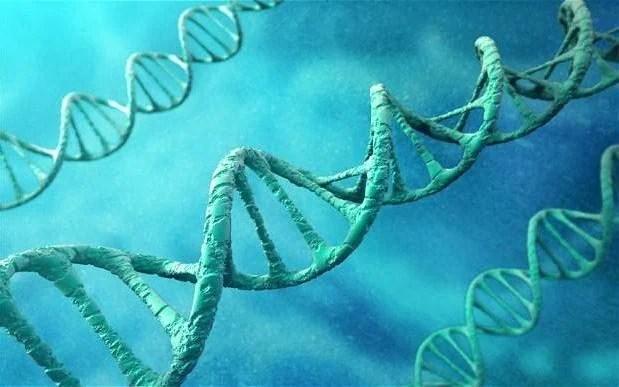 La variante de MC1R liée un âge perçu jeune aux cheveux roux et la peau claire