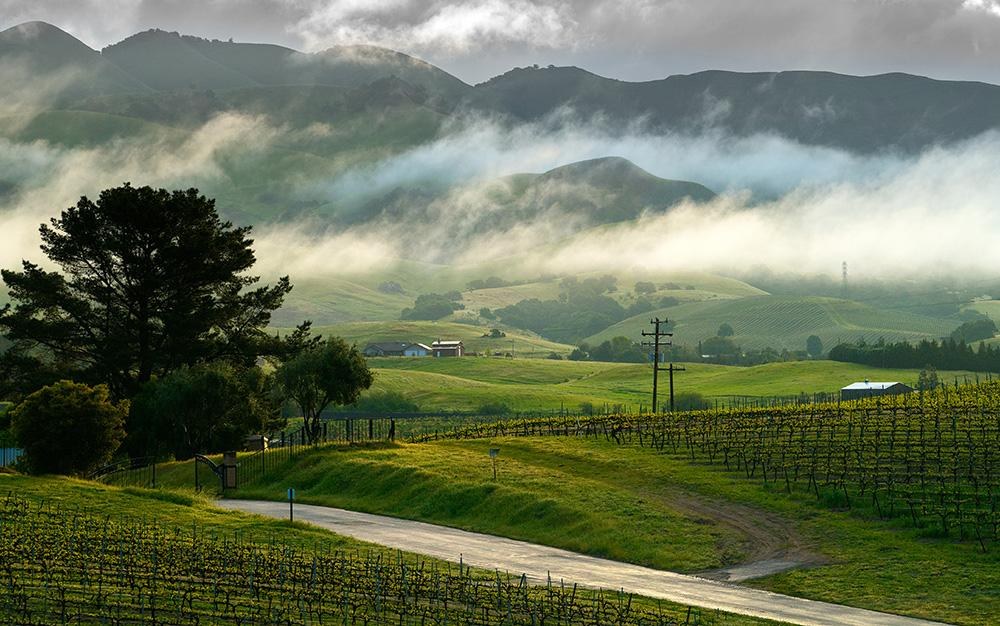 Wine Regions And Vineyards In Central California