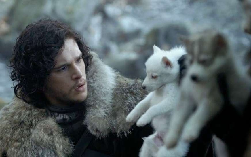 direwolf theories everything we