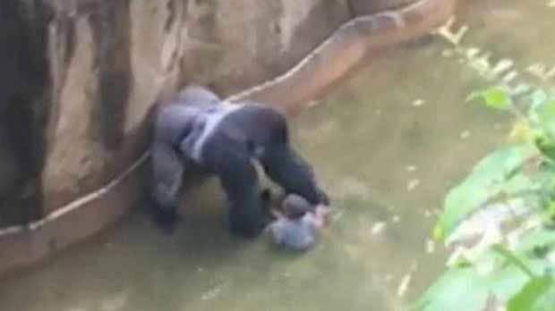 mexican zoo shocked after