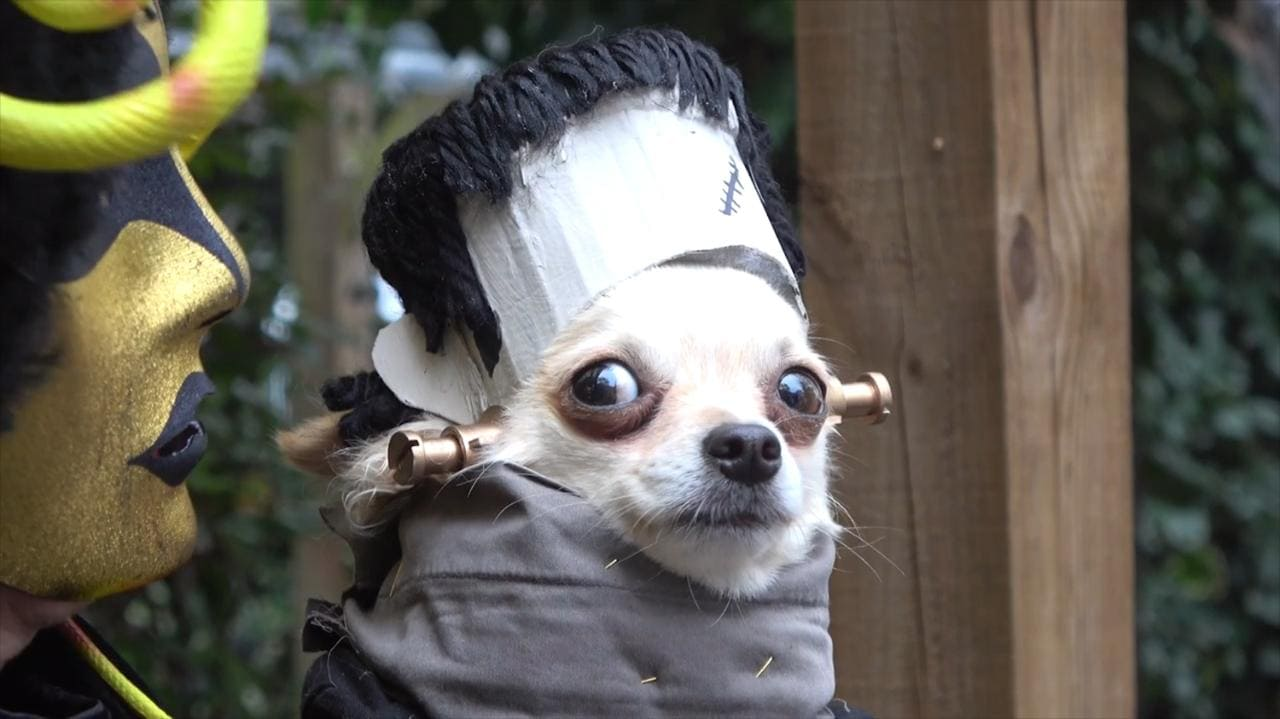 Frightfully fantastic dogs in Halloween costume meet