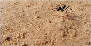An ant walks on stilts