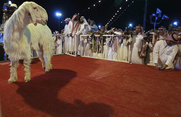 People take photographs of a Damascene goat, which won the Most Beautiful Goat title, during the Mazayen al-Maaz competition in Riyadh, Saudi Arabia...