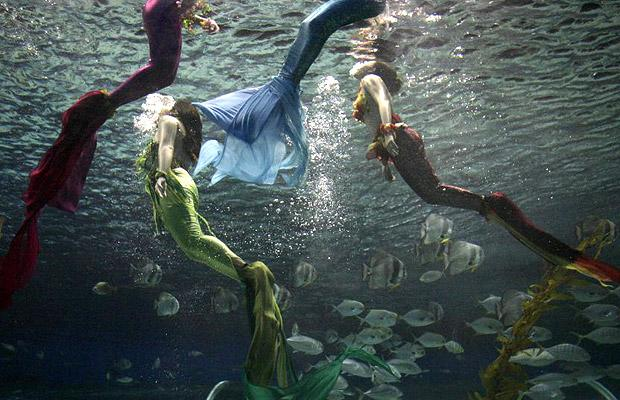 Filipino divers portraying mermaids perform in a tunnel fish tank of the Manila Ocean Park in the Philippines