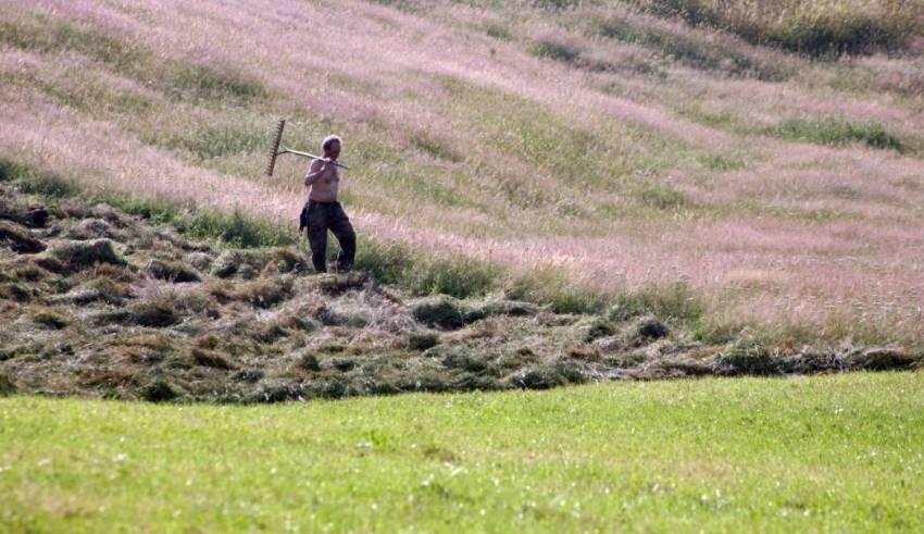 Tempo di fienagione e di profumo inebriate dell'erba - Gianni Ottonello