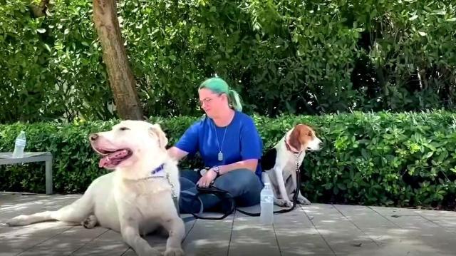 Los familiares de las víctimas del colapso tienen un equipo de perros  terapéuticos a su disposición   Telemundo