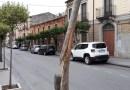 Nicosia, spezzato un alberello in via Umberto è l'ennesimo atto vandalico