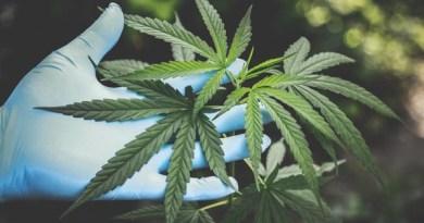 Perché avviare un business nel settore della cannabis light