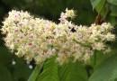 Pollenek a levegőben