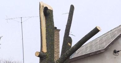 Megmetszették a fákat Pakson