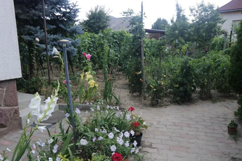 Paksi kertek az országos verseny mezőnyében