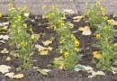 Negyvenezer palántát ültetnek el a városban