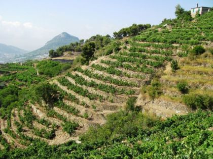 La Regione Liguria avvia le istruttorie per i finanziamenti del ...