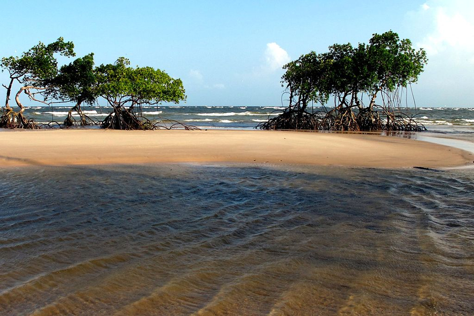 By phogel (Flickr: Ilja de Marajo Beach, Para / Brazil) [CC BY 2.0 (http://creativecommons.org/licenses/by/2.0)], via Wikimedia Commons