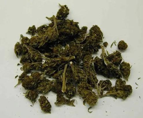 Trovato con una piccola serra di marijuana in casa